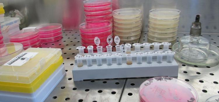 Laboratory (1) 750